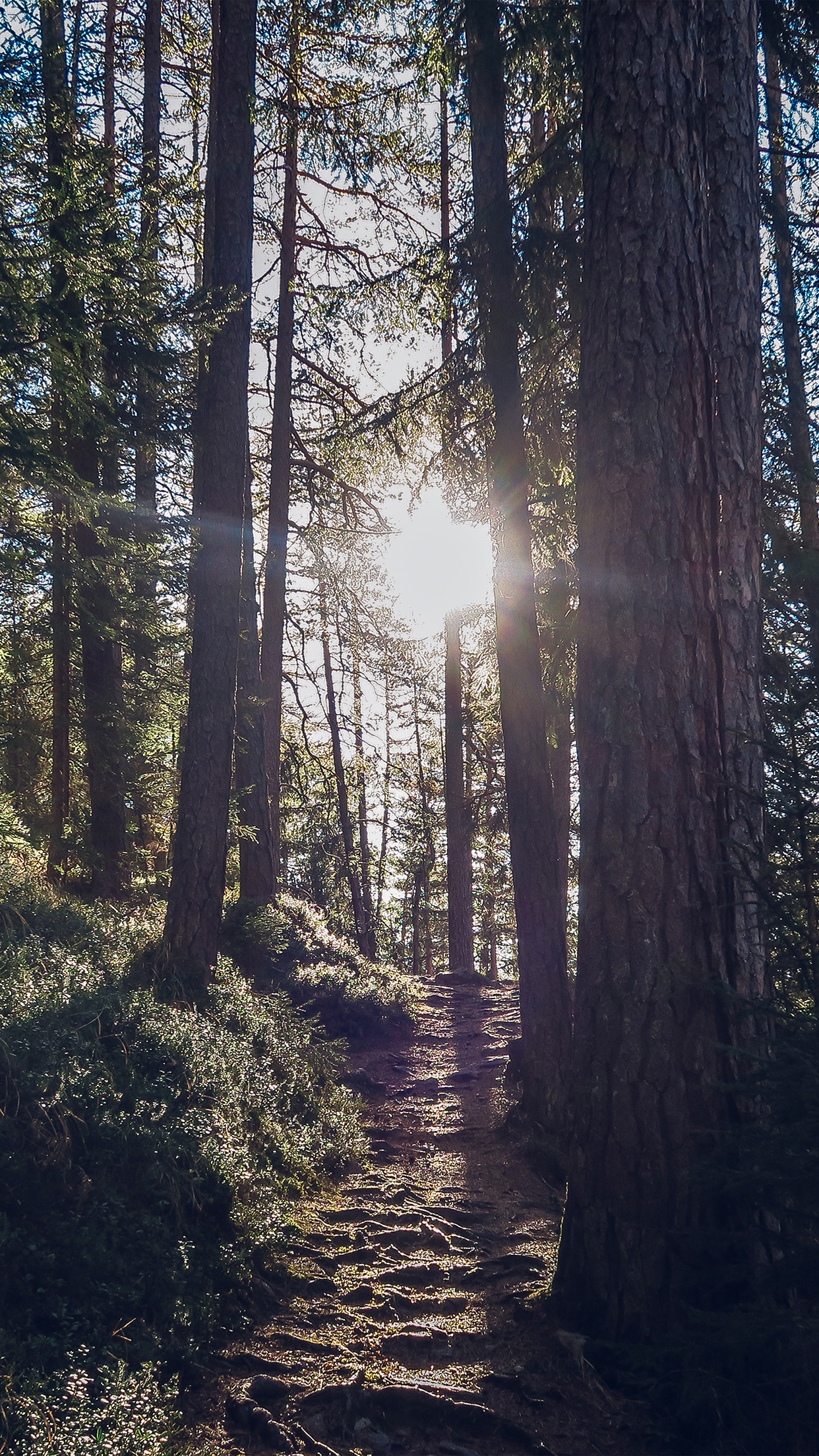 Fall Wood Wallpaper Papers Co Iphone Wallpaper Nh09 Light Wood Sun Forest