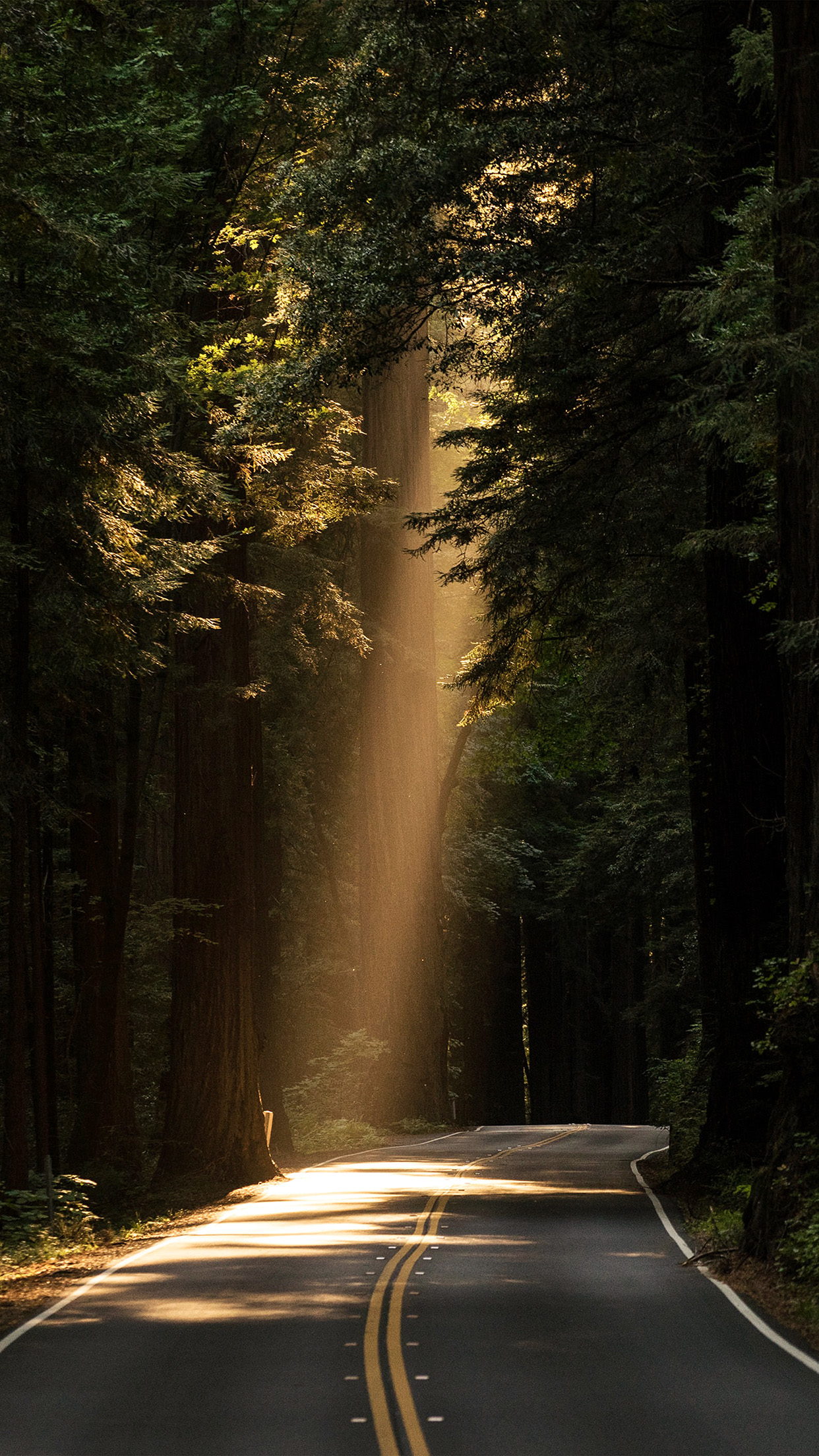 3d Art Street Wallpapers Papers Co Iphone Wallpaper Nh17 Light Road Wood Forest