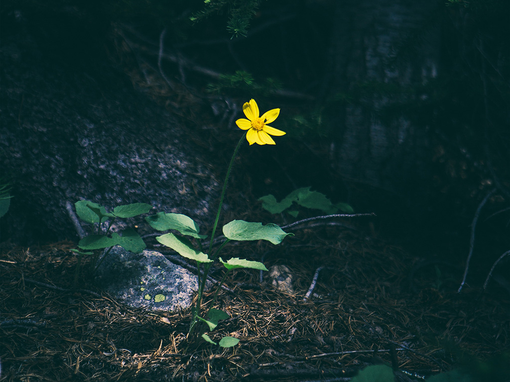 Back To The Future Iphone X Wallpaper Wallpaper For Desktop Laptop Nh35 Flower Yellow Forest