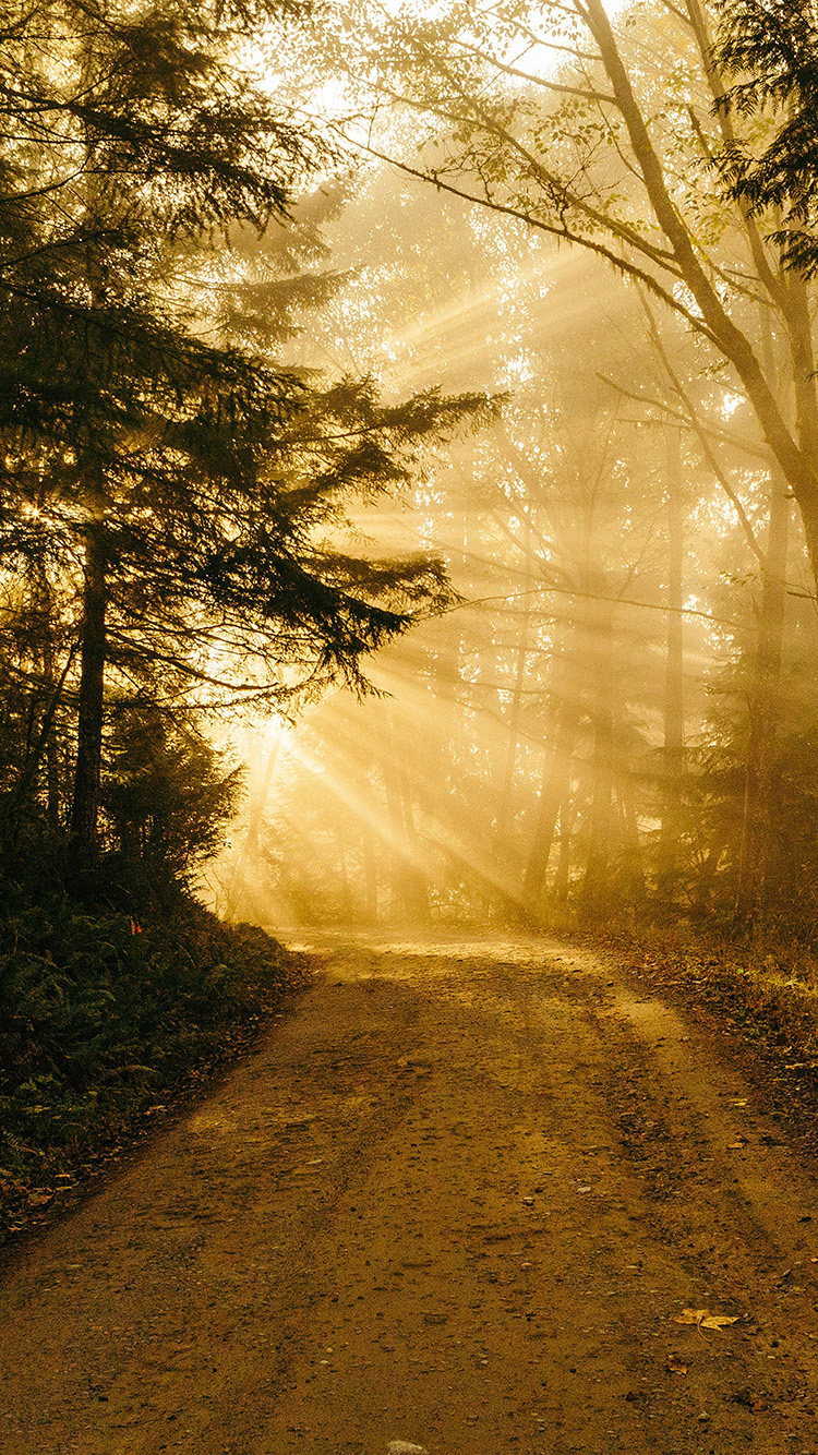 Iphone X Gold Wallpaper I Love Papers Nh73 Sunny Road Wood Forest Light Tree