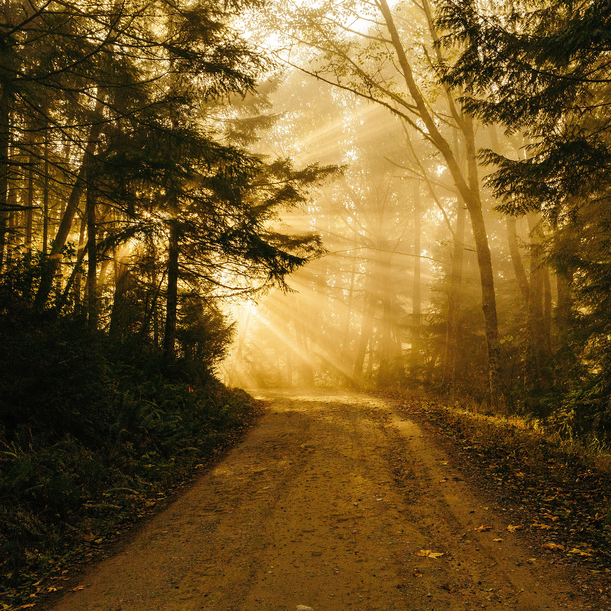 Dark Quote Wallpapers I Love Papers Nh73 Sunny Road Wood Forest Light Tree