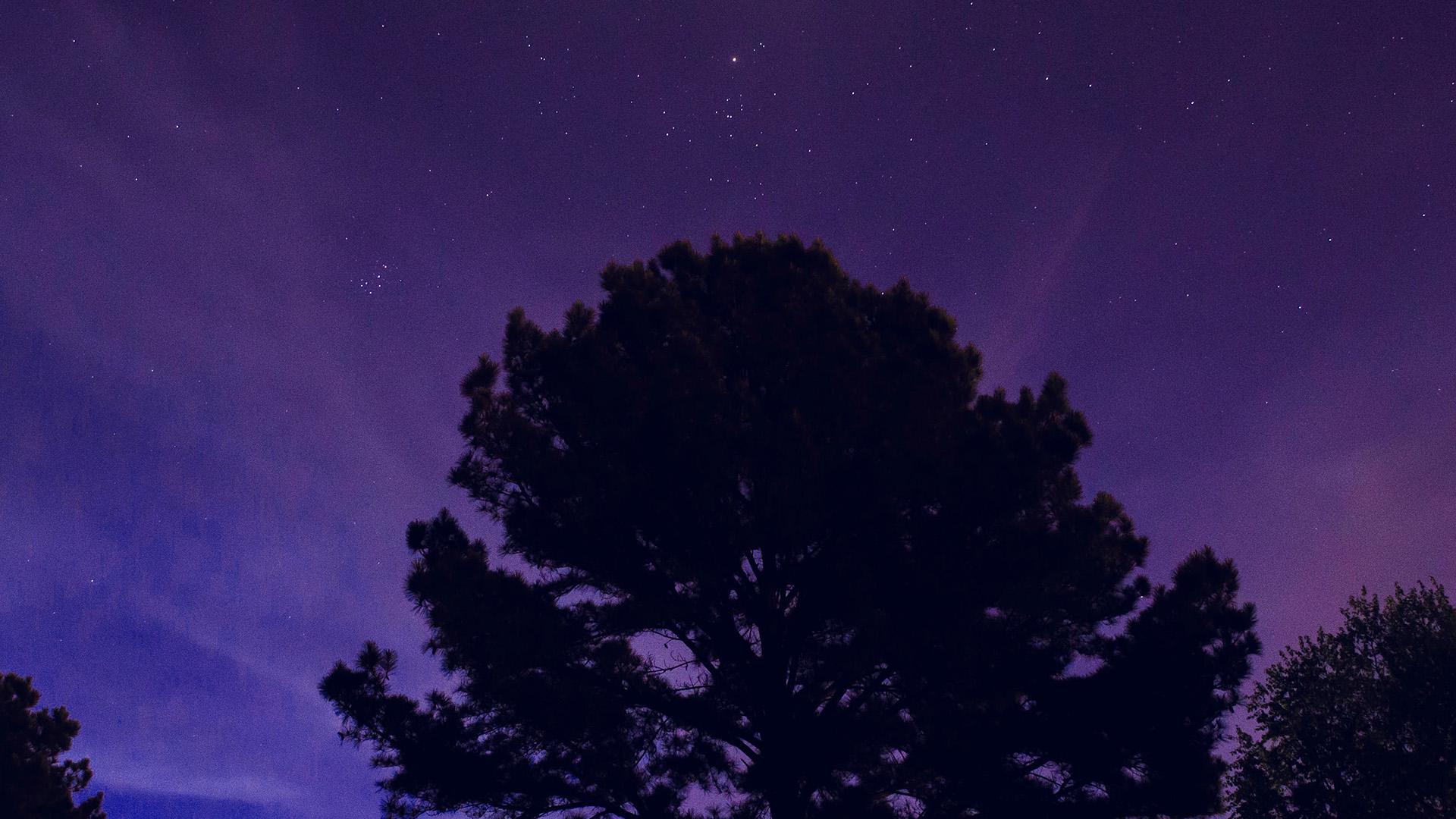 Fall Wood Wallpaper Nj68 One Star Shine Night Dark Blue Sky Wood Purple Wallpaper