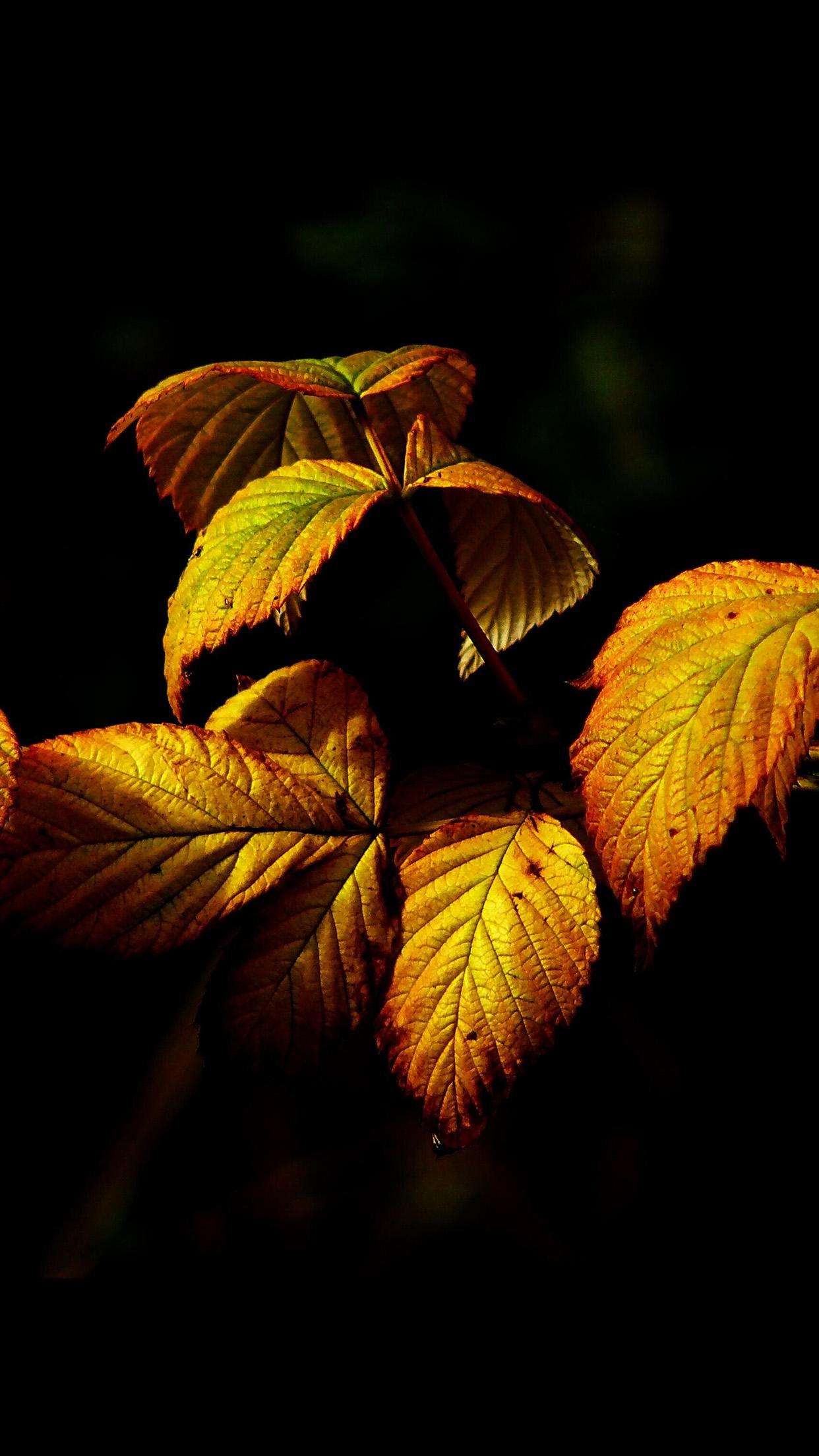 Fall Wallpaper For Ipad Air 2 No32 Fall Leaf Dark Nature