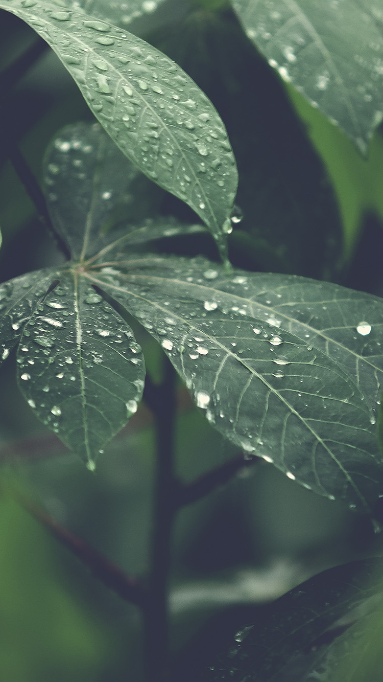 Download Fall Wallpaper For Laptops Iphonepapers Com Apple Iphone8 Wallpaper Nu51 Rain Forest