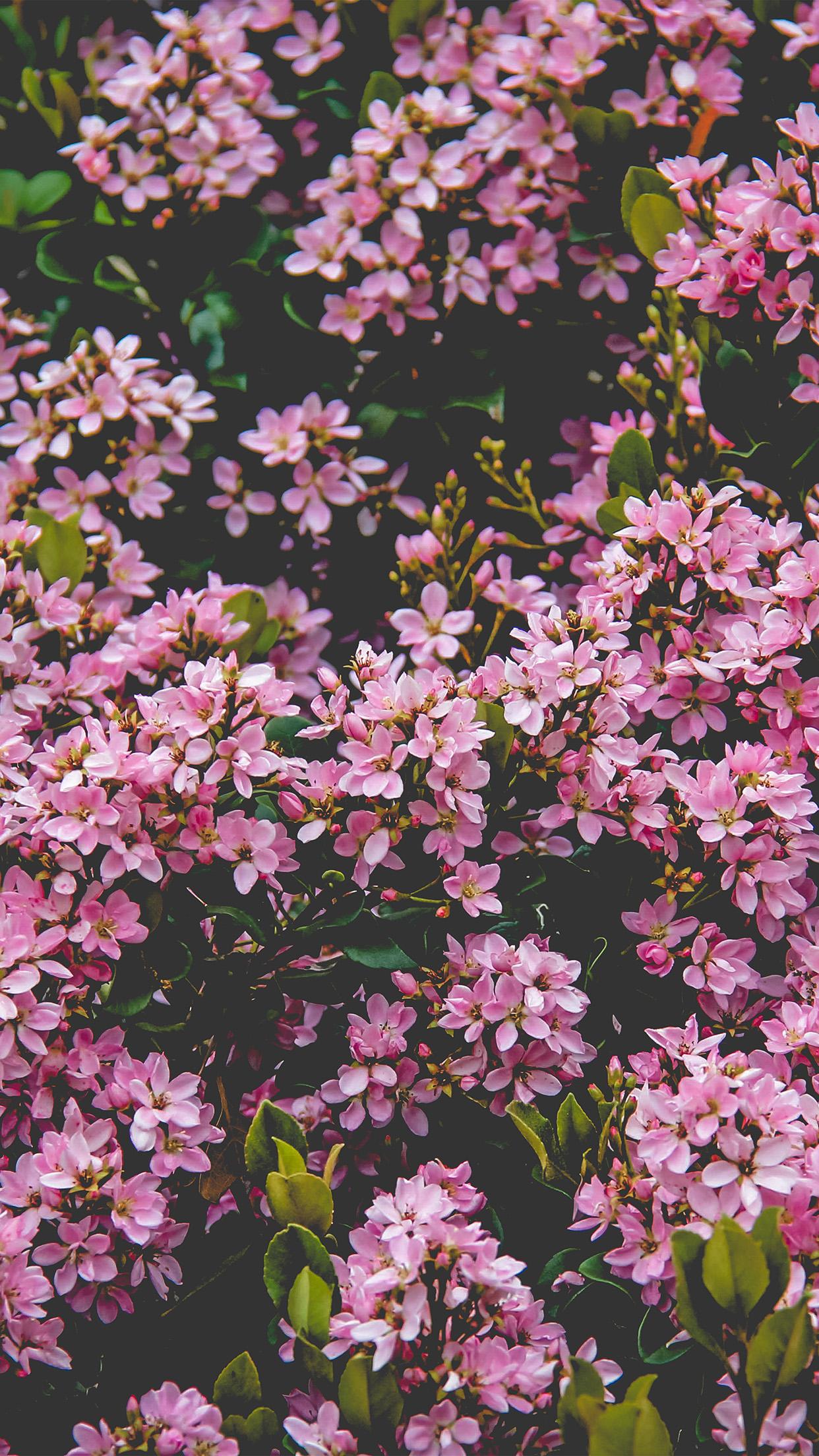 Disney Wallpaper Hd Nv68 Flower Pink Spring Happy Nature Wallpaper