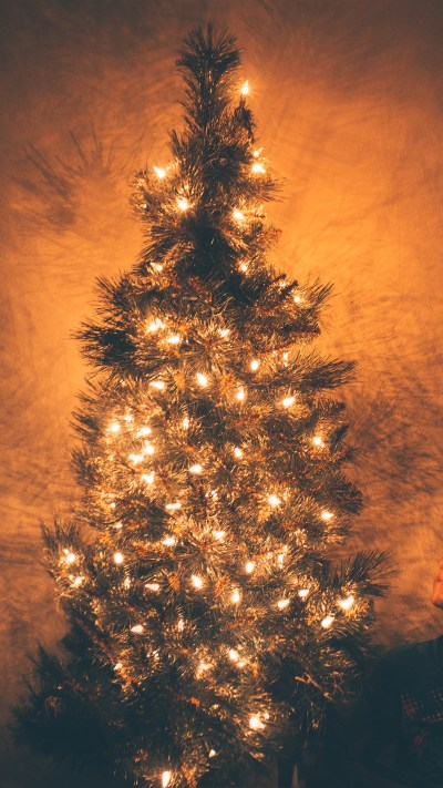 nv79-christmas-tree-light-holiday-tree-nature-wallpaper