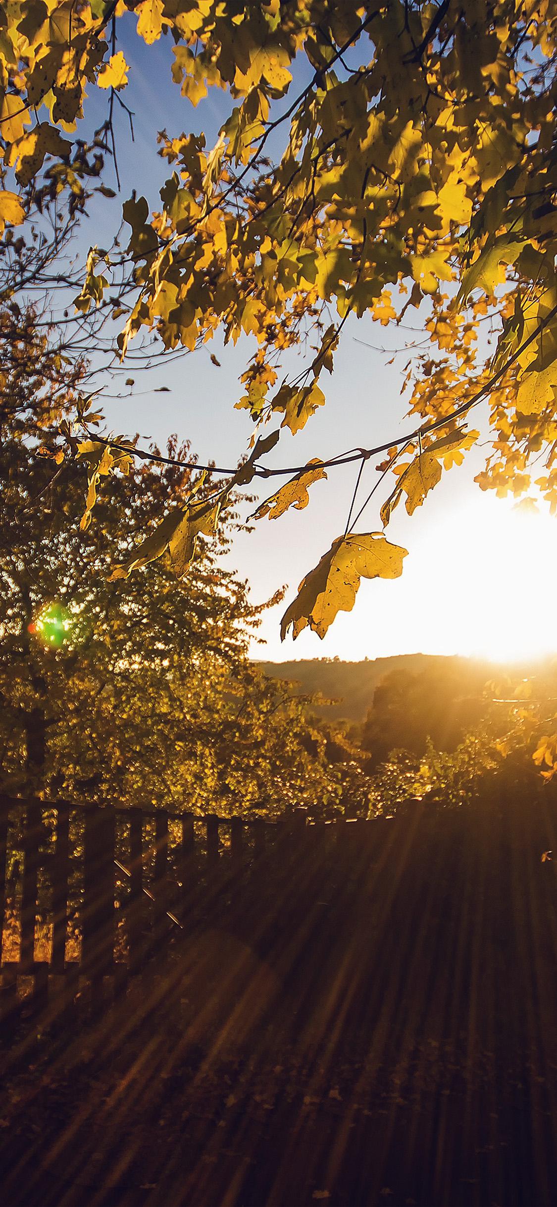 Fall Wallpaper Screensavers Nw22 Morning Sunlight Fall Nature Wallpaper