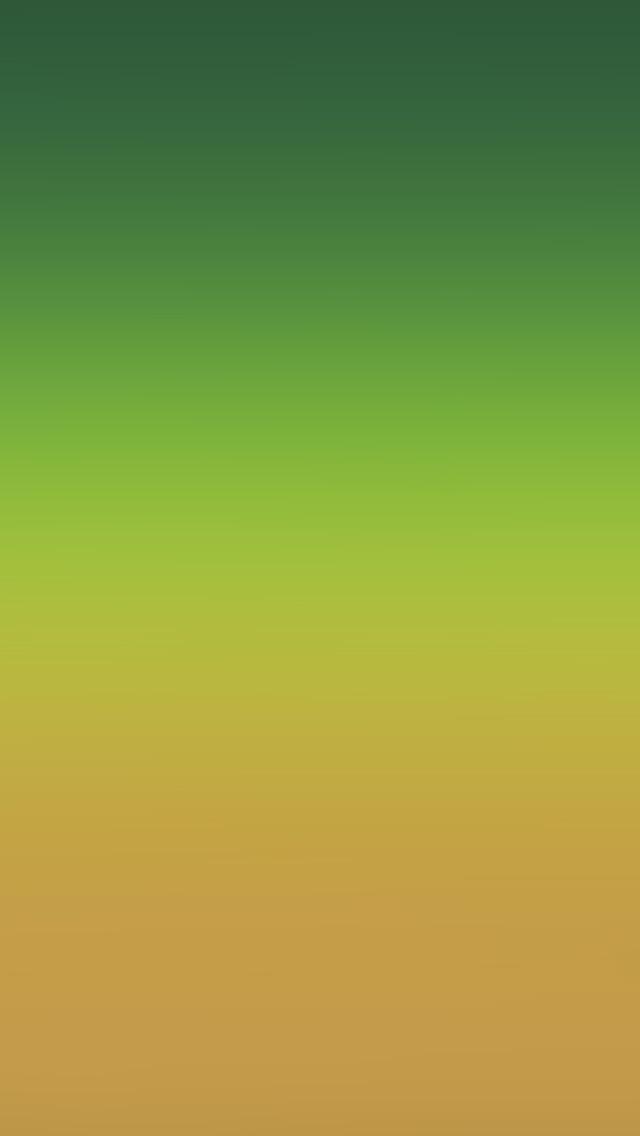 Iphone 6 Orange Flower Wallpaper Iphone 6