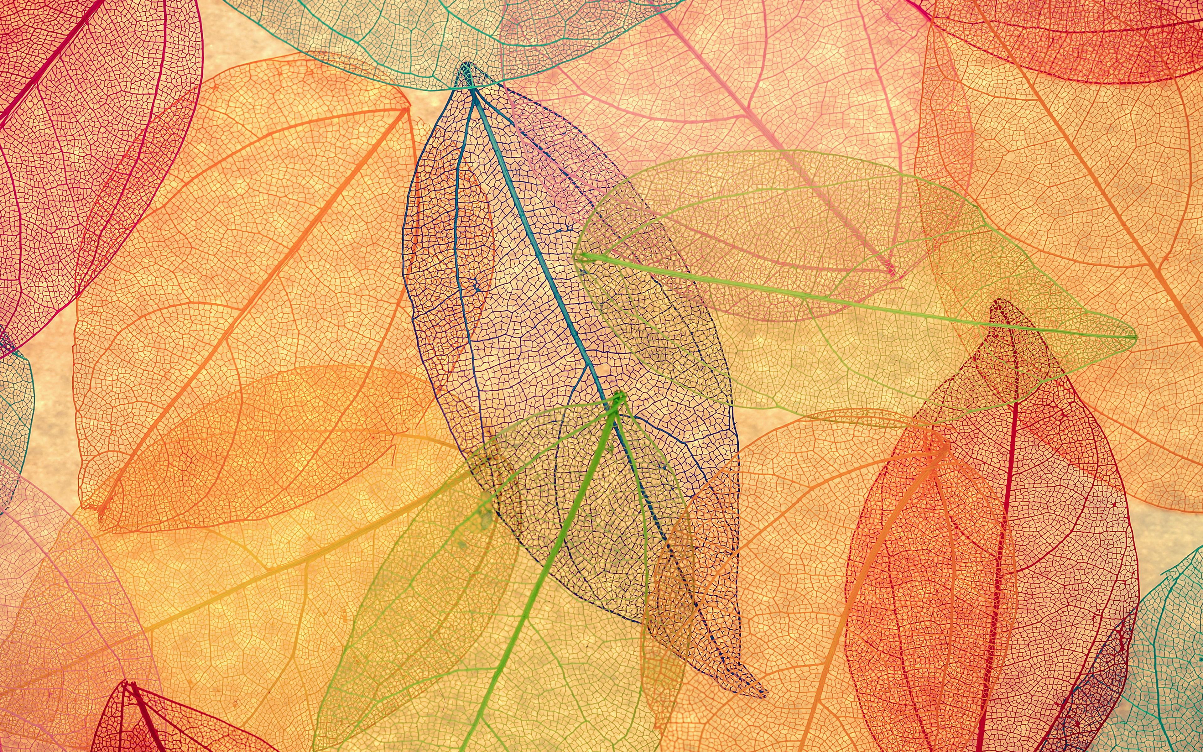 Fall Wallpaper Ipad Pro Vm23 Rainbow Color Leaf Art Fall Nature Pattern