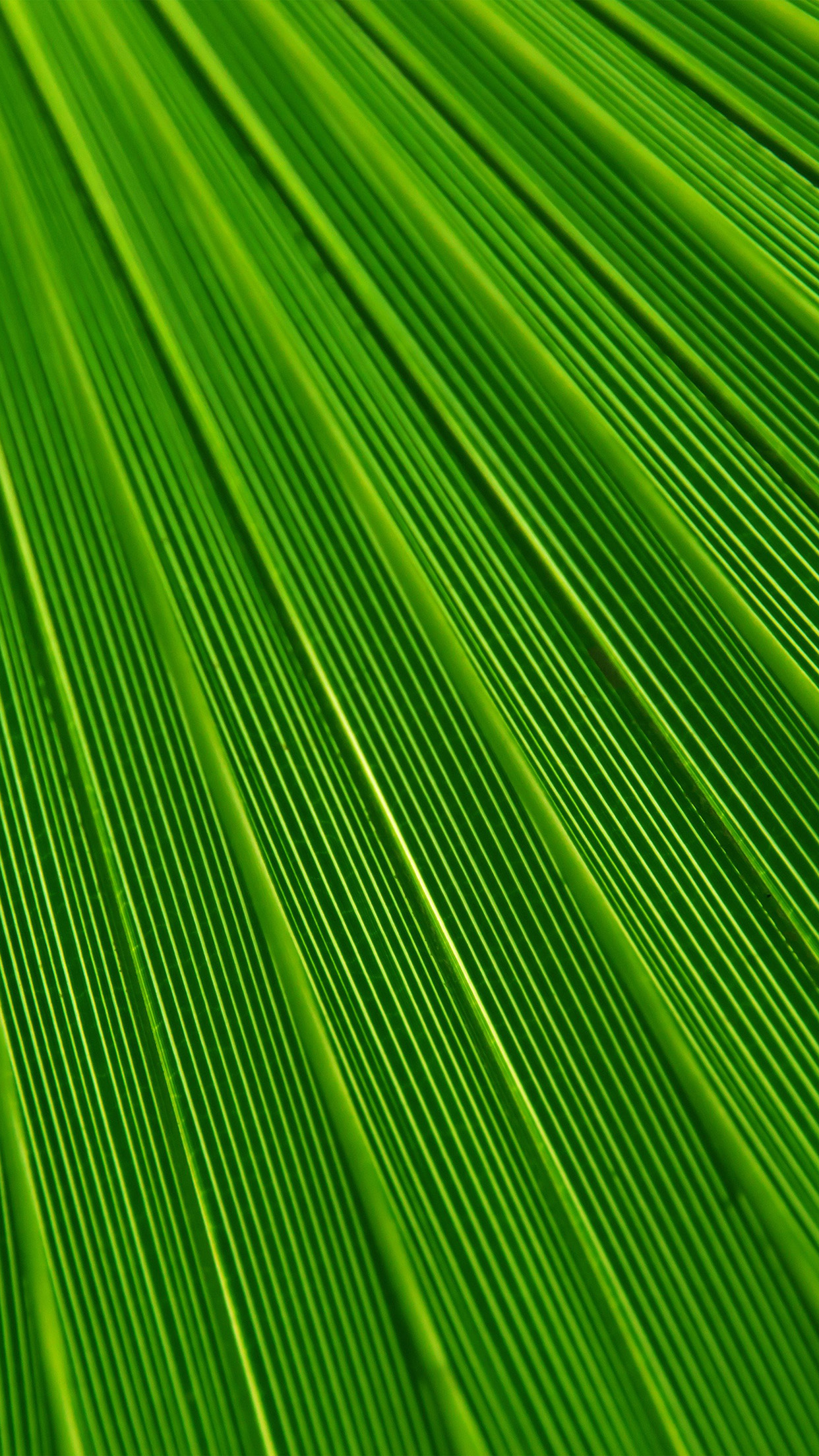 Minimalist Iphone X Wallpaper Vn29 Leaf Green Surface Texture Nature Pattern