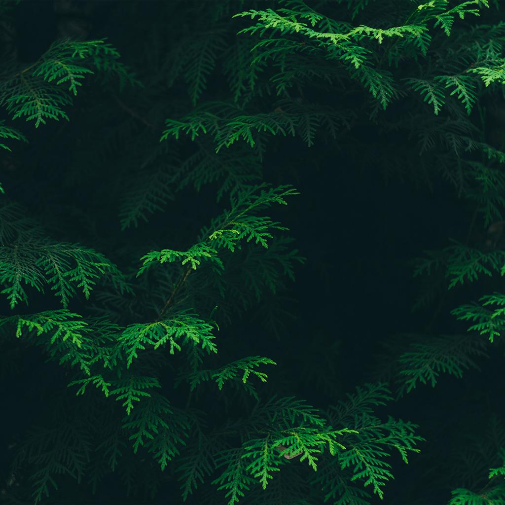 Fall Woods Wallpaper Ipad Retina