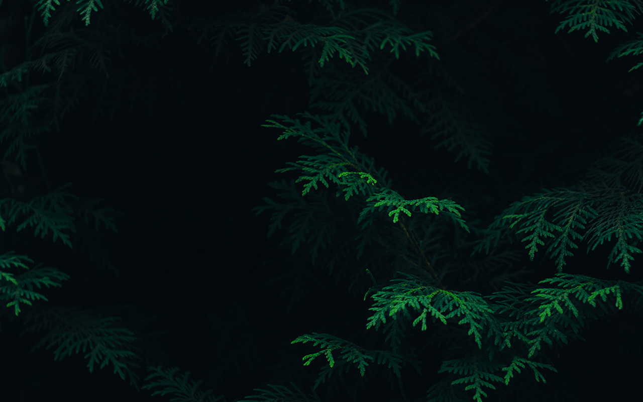 Palm Tree Iphone Wallpaper Wallpaper For Desktop Laptop Vs89 Tree Leaf Green