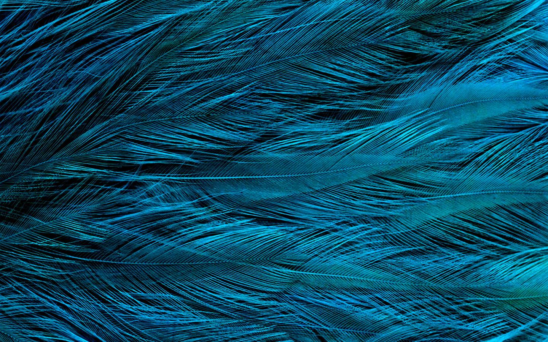 Car Wallpapers For Macbook Pro Vt31 Feather Blue Bird Texture Pattern Wallpaper