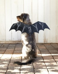 bat-dog-costume-ctr