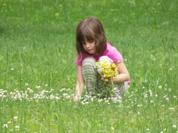 bricolage de printemps, cueillir des fleurs
