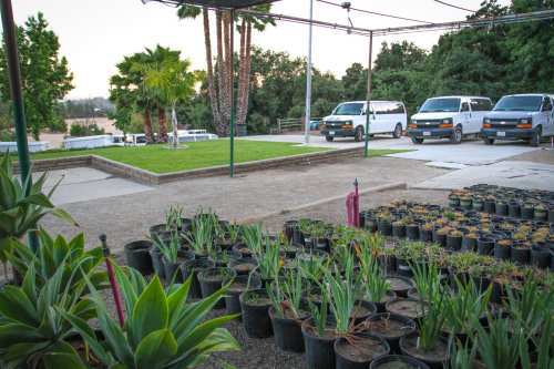 Medium Of San Gabriel Nursery