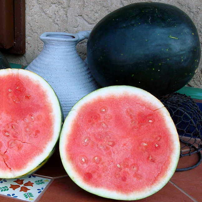 Burgon & Ball Harvest Moon Seedless Watermelon Seeds From Park Seed