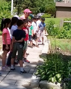 Looking at the Hostas!