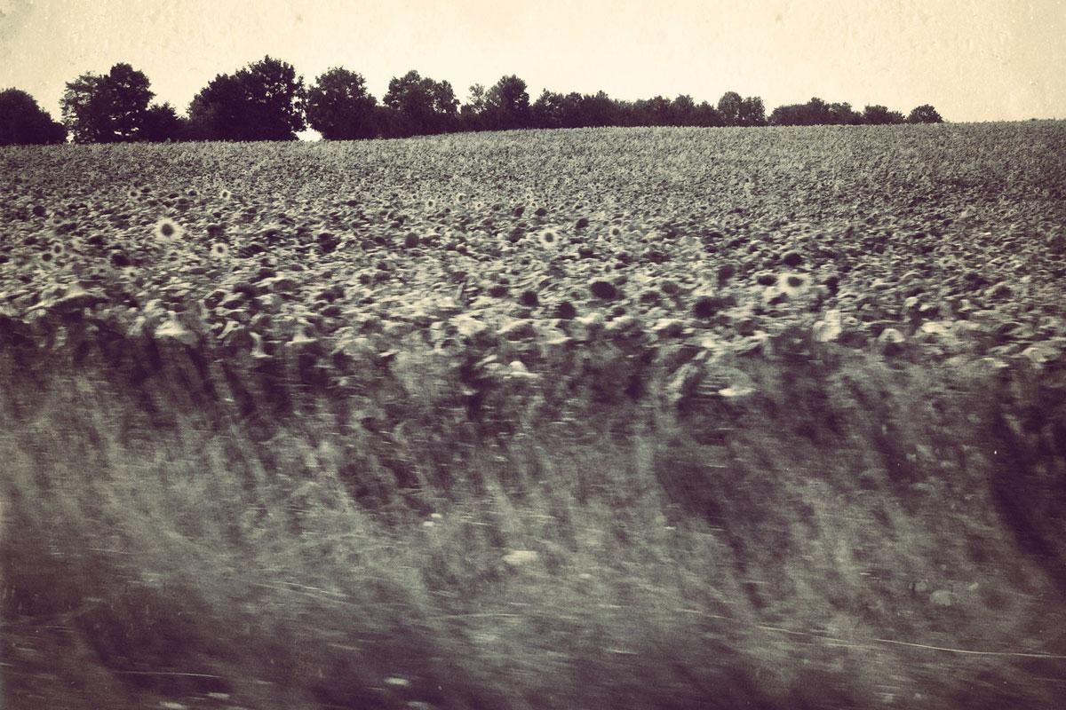 nature-landscape-1200