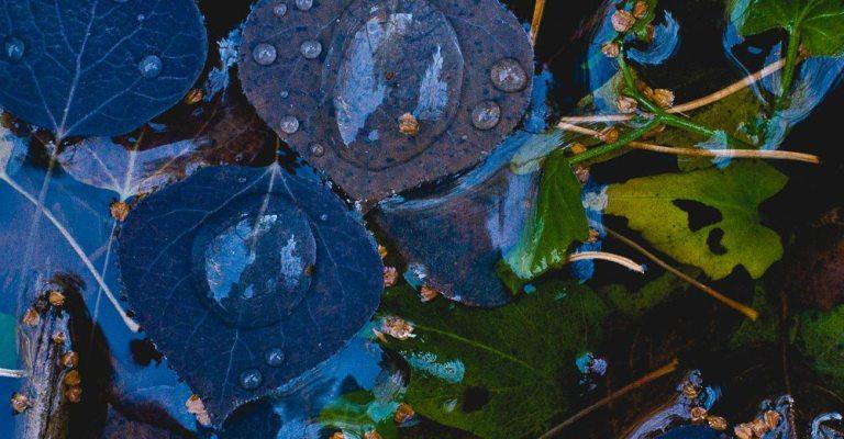 Aspen Leave Detail