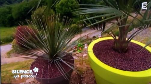 palmier pot