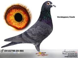 DV-02799-09-966 MINI