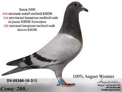 DV-09306-16-313 MINI