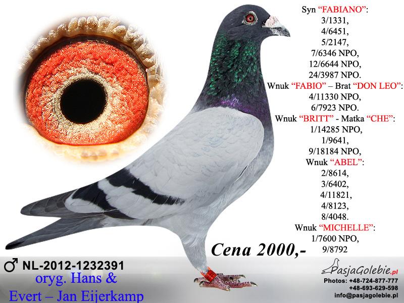 nl-12-1232391