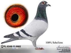 PL-0349-11-9802 MINI