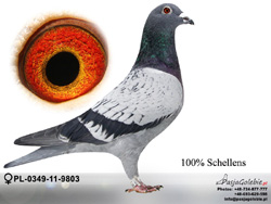 PL-0349-11-9803 MINI