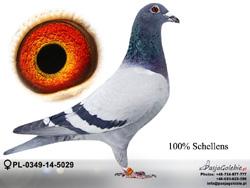 PL-0349-14-5029 MINI