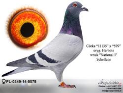 PL-0349-14-5079 MINI