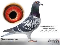 PL-0349-15-1891 MINI