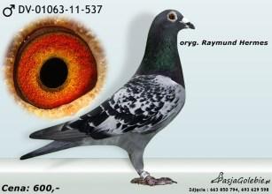 RODOWOD-DV-01063-11-537
