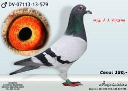 RODOWOD-DV-07113-13-579