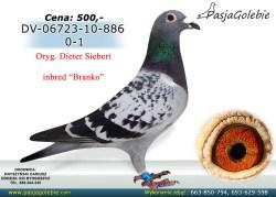 10/RODOWOD-DV-06723-10886