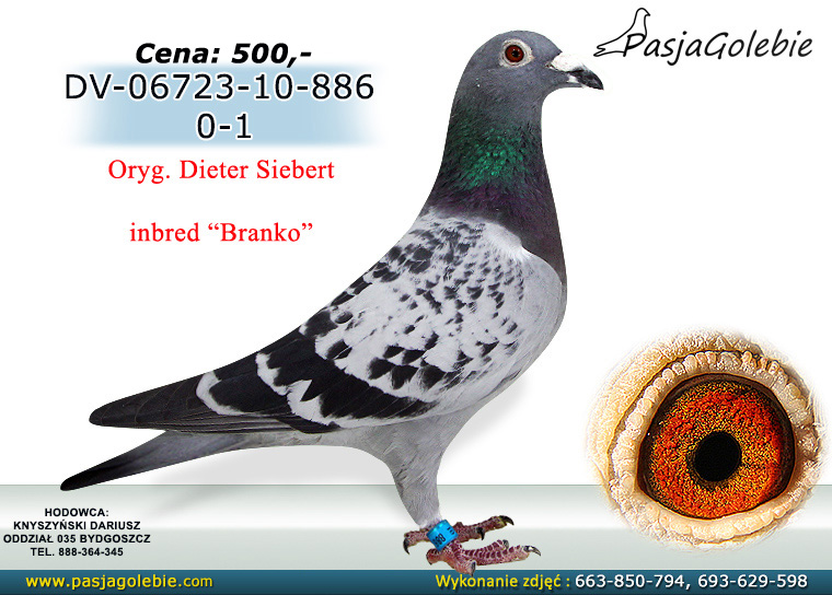 DV-06723-10-886