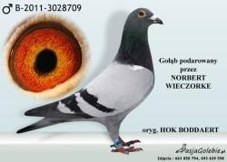 RODOWOD-B-2011-3028709