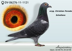 RODOWOD-DV-06276-11-1121