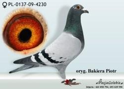 RODOWOD-PL-0137-09-4230