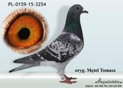 RODOWOD-PL-0159-15-3254