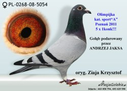 RODOWOD-PL-0268-08-5054KARTA WYSTAWY-PL-0268-08-5054