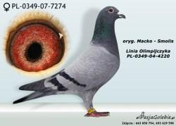 RODOWOD-PL-0349-07-7274