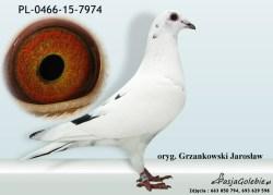 RODOWOD-PL-0466-15-7974