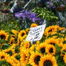 Passagem Gastronômica - Columbia Road Flower Market - Londres - Inglaterra