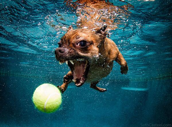 10 Thosand Cute Cat Wallpapers This Must Be Underwater Dog Passepartout Bianca Olivia