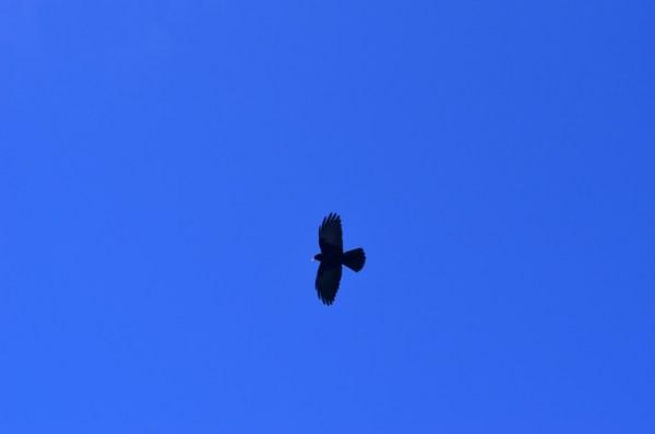 Journey to Kaza - The yellow-beaked crows!