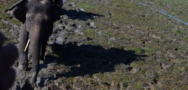 At Dudhwa National park... for the elephant safari... the terrain - wetlands