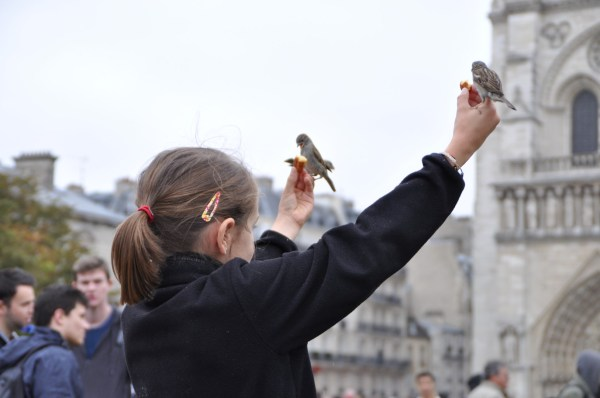And I saw how friendly the birds were... or was it that they were fearless of the little girl?