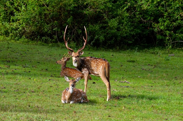 Bandipur and Kabini - The typical family pose!